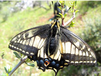Jessica Hellman butterfly