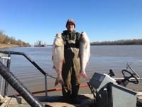 Two silver carp on the Mississippi River in Missouri. Photo by Sara Tripp/Missouri Department of Conservation....   </div>   <p class=