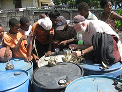 David Severson collects aegypti larvae from breeding sites in Haiti