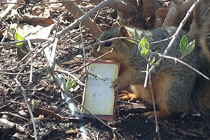 Squirrel Photo taken by Margaret Nicola Abruzzo
