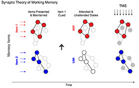 Synaptic Theory of Working Memory