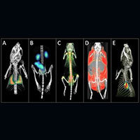 Example PET, SPECT and CT images from the Albira at the Notre Dame In Vivo Imaging Facility