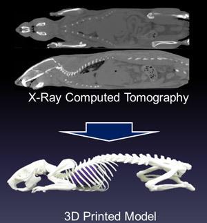 3-D print of a rat
